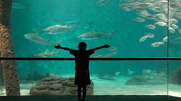 Best Aquariums To Visit My Bucket List Pinterest