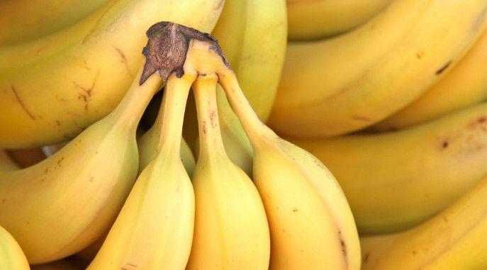 Bananas,+Panama+Disease