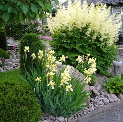 A delicate yellow iris with a huge astilbe amongst stones and some conifers. Would be a nice start for a moon garden :)