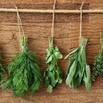 Come e quando usare le 4 erbe aromatiche della salute: salvia, rosmarino, basilico e timo