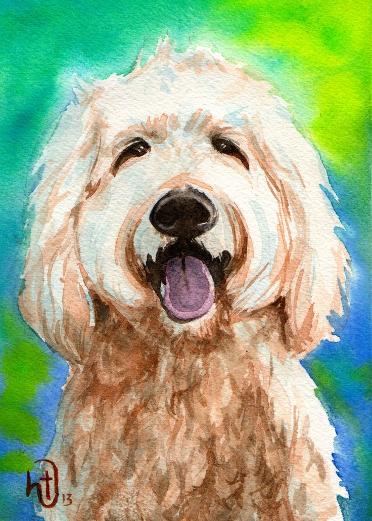 golden doodle portraits - Google Search
