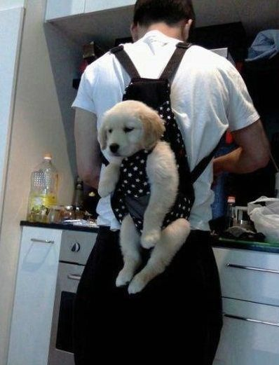 Puppy's thinking「なんか・・・つ、つらい・・・」.  Keeps puppy out of trouble when you're busy...hahaha