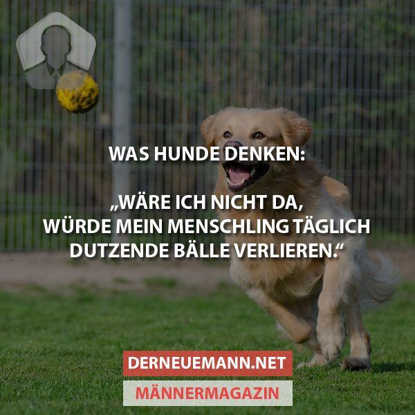 Was Hunde denken ... #derneuemann #humor #lustig #spaß