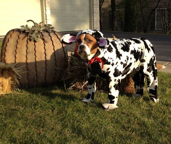 Halloween dog costumes, Special order, custom made, dog costume black and white cow for large dog on Etsy, $60.00