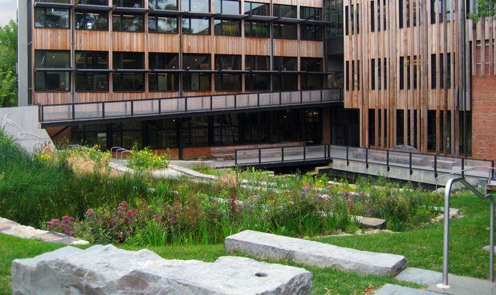 Terraced wetlands filter building wastewater at Sidwell Friends School, Washington, D.C. Design by Andropogon Associates and Natural Systems International