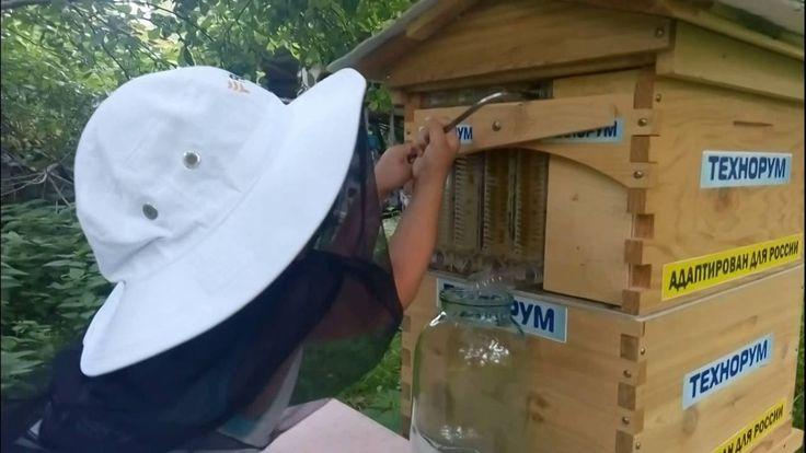 Улей из которого вытекает мёд. Тест в России. 6 часть