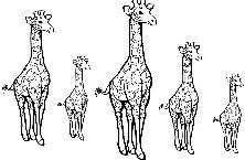 giraf van groot naar klein