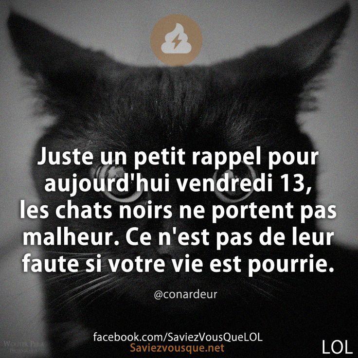 """""""Juste un petit rappel pour aujourd'hui vendredi 13, les chats noirs ne portent pas malheur. Ce n'est pas de leur faute si votre vie est pourrie."""""""