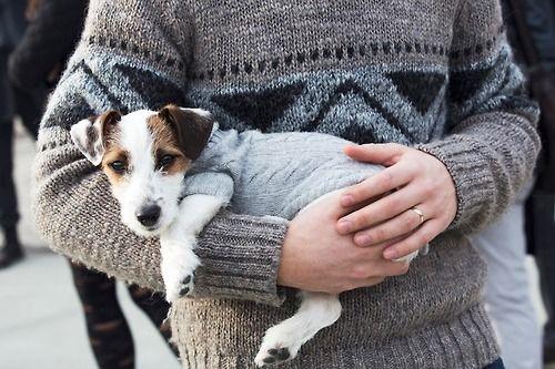 sweet jack puppy