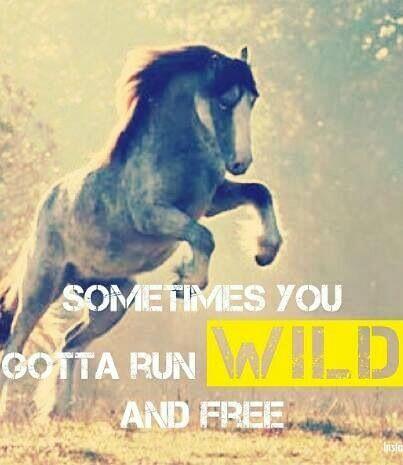 """Sometimes you gotta run wild and free"" #Horses"