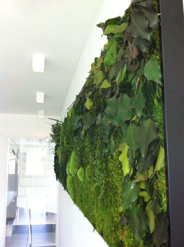 Cuadros vegetales preservados en vivienda particular - Benicasim  (Castellon)