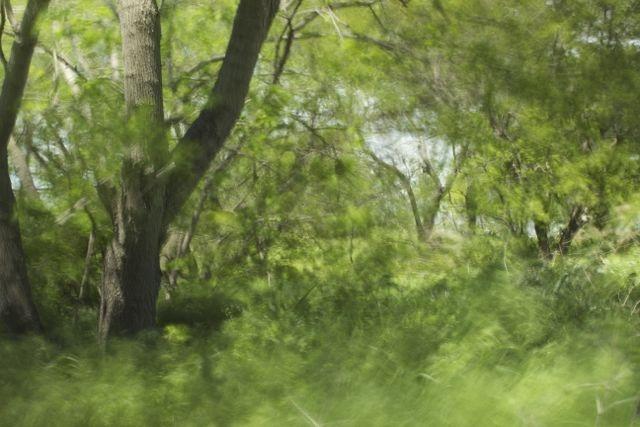 風景-2013-02