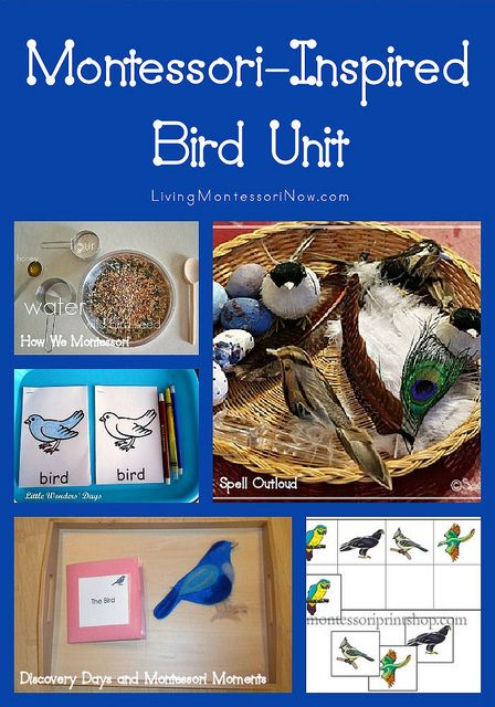 Montessori-Inspired Bird Unit