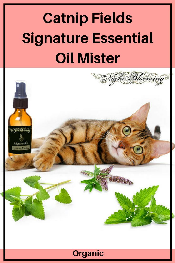 Catnip Fields Signature Essential Oil Mister is a catsafe