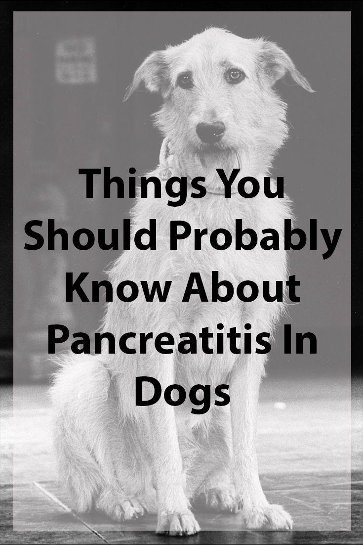Dogs and pancreatitis in 2020 pancreatitis in dogs pet