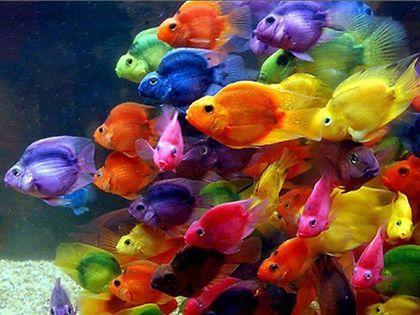 poissons coloré