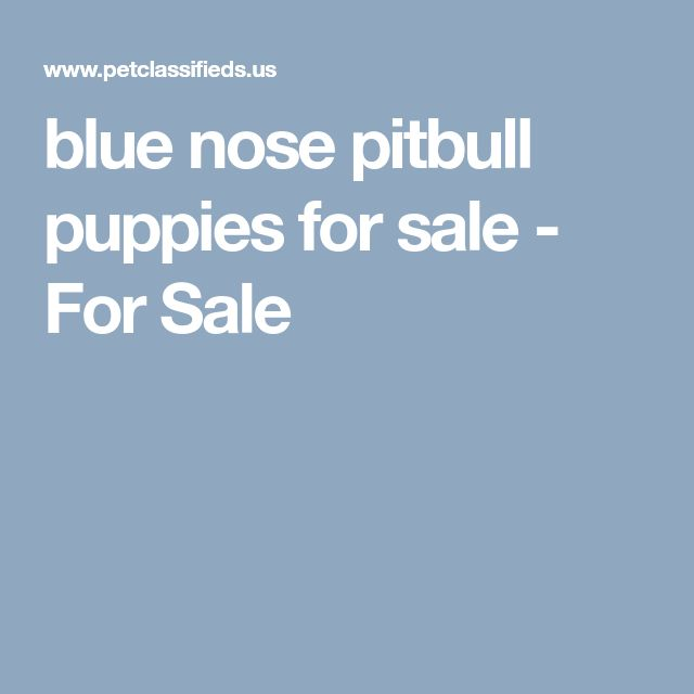 blue nose pitbull puppies for sale - For Sale