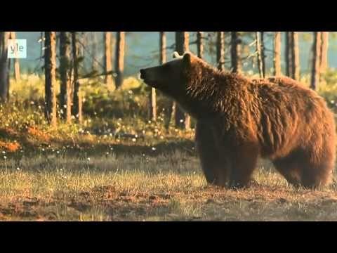 Hieno TV-sarja Suomen luonnosta! Avara luonto - Villi Pohjola (1/6) - Suomi