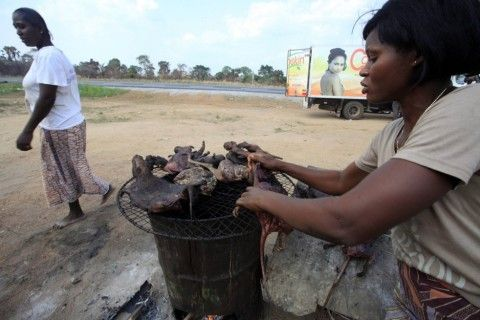 Why Do We Relish In Eating These Meats While The Biodiversity Suffers? | eTimes Nigeria