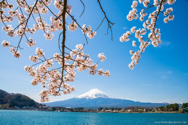 Budgeting for a trip to Japan during Cherry Blossom Season - Bruised Passports