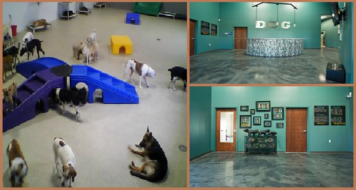 There are many #dogdaycareCenters that have been taking an exceptionally good care of dogs and providing them what they need to become sociable. You can leave your dog at a good #dogboarding facility so that you can stay relaxed all day. http://dog-boarding.webnode.com/news/why-should-you-realize-the-importance-of-a-dog-daycare/