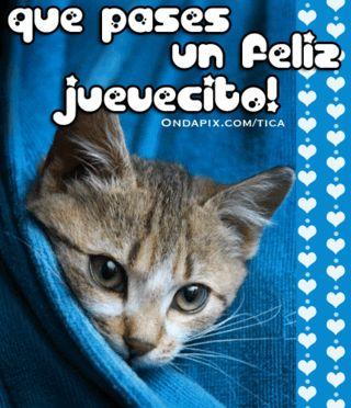 FELIZ JUEVES PRE-SOCIAL>>>>>> - Amigos de Gabito - Gabitos