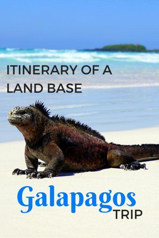 Highlights & DIY Itinerary of a Land Based Galapagos Islands Trip with kids in Puerto Ayora, Santa Cruz Island