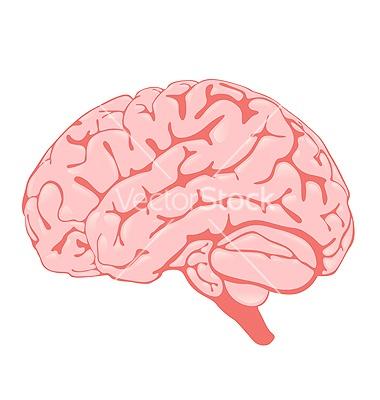 Pink brain side view vector 794352 - by Stockerteam on VectorStock®