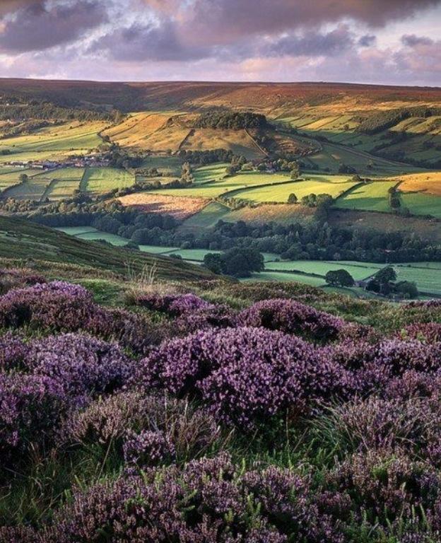 Campos de Rosedale-North Yorkshire Inglaterra.-