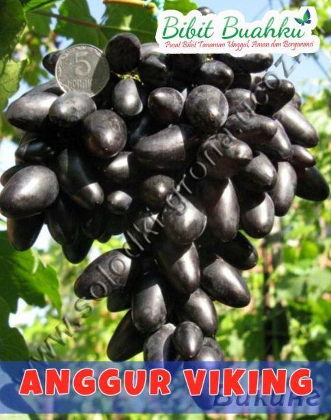 Manfaat Buah Anggur Kering