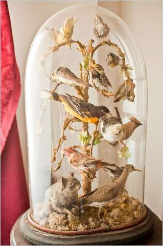 God, this is so beautiful.   songbird taxidermy display