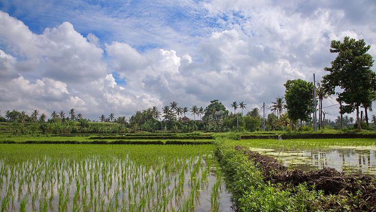 Beautiful view from Bali