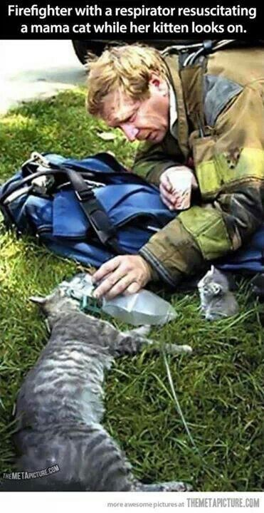 Firefighter provides oxygen to mama cat while kitten looks on