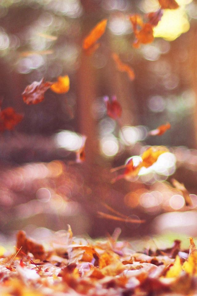 Fall Leaves Nature Tree Year Sad Flare #iPhone #4s #wallpaper