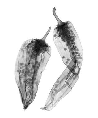X-ray art - chili pepper  I love that this picture lets people see what goes on inside of a pepper before its cut open!