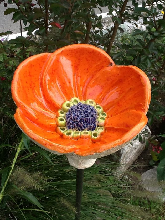 Diese Blüte strahlt in jedem Garten. Egal ob man …