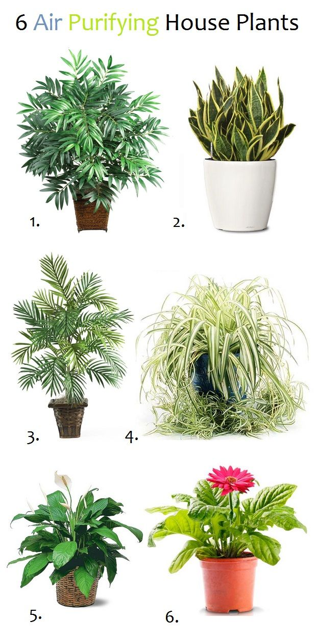 Air Purifying Plants- I don't know if its true, but they're pretty anyway :)