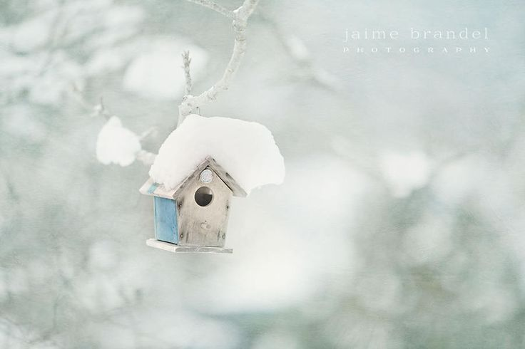 Photography print: bird house in winter, snow covered bird house, winter photography, snowy day, fine art print by JaimeBrandelPhoto on Etsy