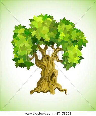árbol frondoso roble como ilustración de vector símbolo ecología