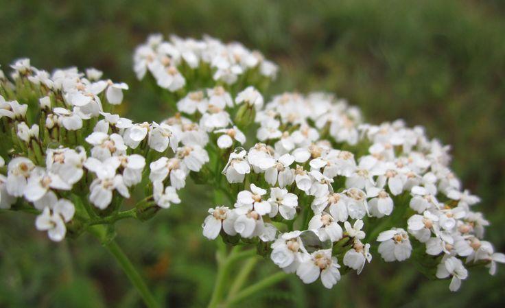 Последние цветы согрели душу светом Природной доброты. Благодарю за это. Осенние цветы - души очарованье, В них – радость и печаль, И осени дыханье.  Таинственна Вольна