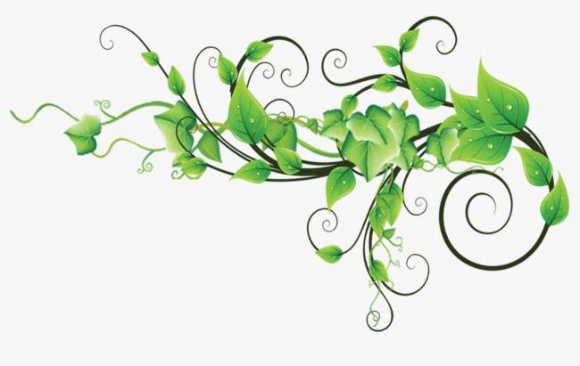 Cartoon Green Flower Vine Png And Psd Flowering Vines Green Flowers Cartoons Vines