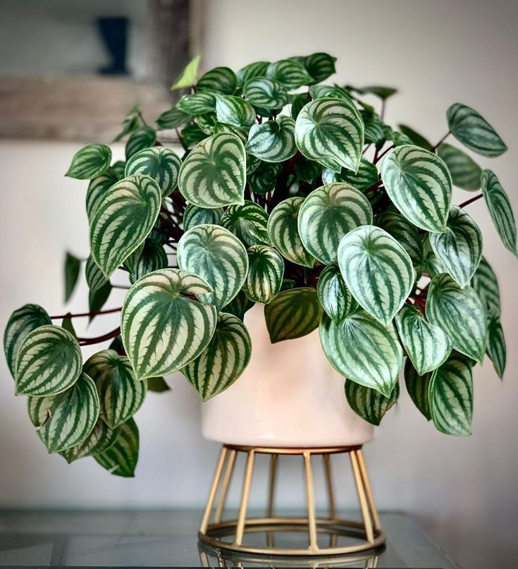 All Plants, Garden Plants, Indoor Plants, Exotic House Plants, Watermelon Plant, Peperomia Plant, Ficus, Plant Aesthetic, Mother Plant