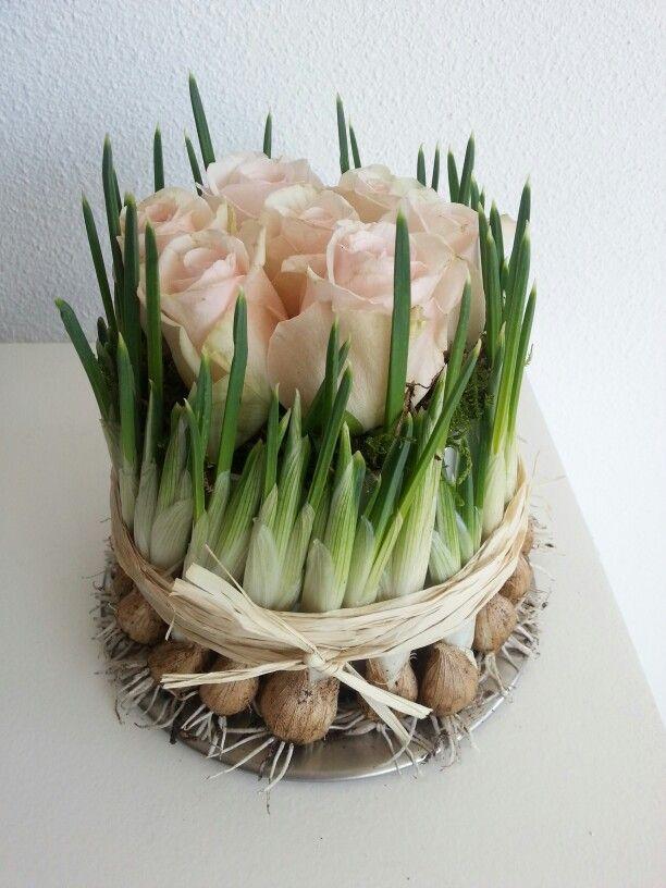 Roosjes - Bloembollen - Voorjaar - Lente