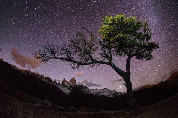 Dupa cateva ore bune de drumetii prin Patagonia, fotograful Max Seigal a gasit in sfarsit copacul singuratic pe care il cauta pentru a-l fotografia sub cerul plin de stele.