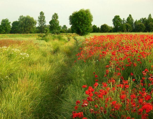 Summer in Zulawy, Northern Poland