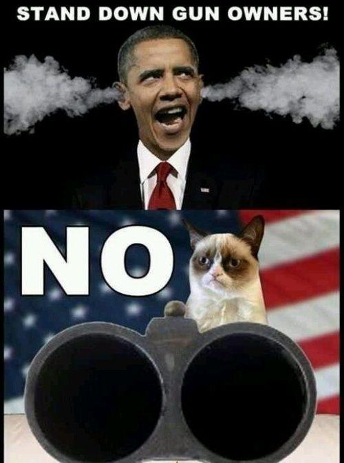 Screw you Obama.... .NO Politics, America, 2Nd Amendment, Guns Control, Angry Cat, Guns Owners, Grumpycat Memes, Cat Stu...