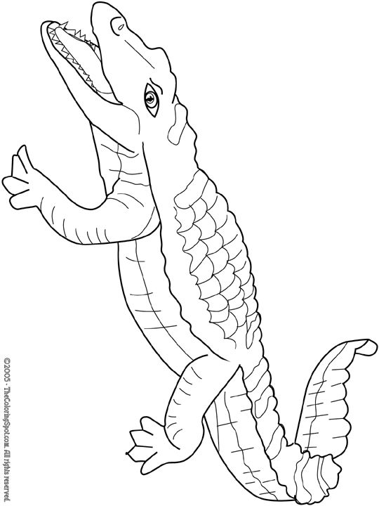 14 best Coloring pages images on Pinterest Coloring books