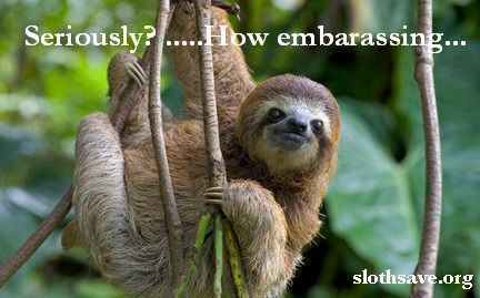 how fast do three toed sloths move