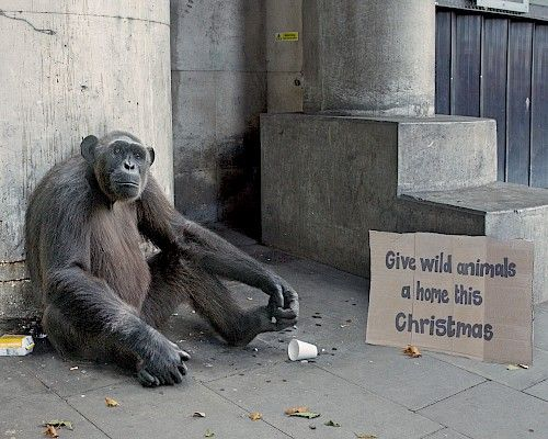Here's the new Born Free Christmas campaign. Created collaboratively between George Logan and creatives Katy Hopkins and Steve Hawthorne.   Adopt an animal in need today at www.give.bornfree.org.uk/adopt