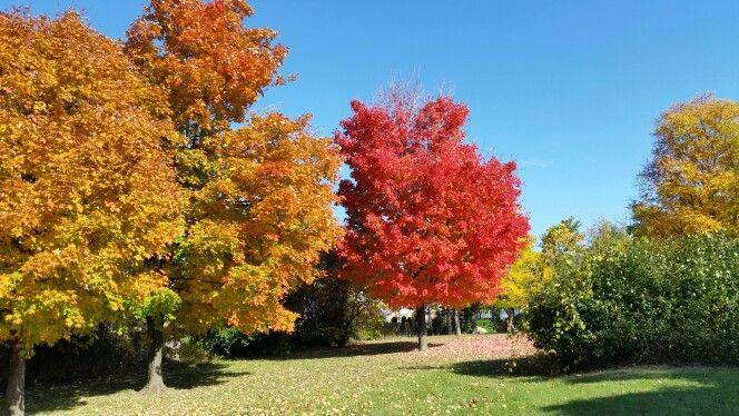 Fall walk!